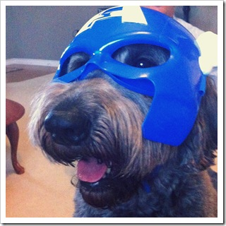 captain america costume for dogs