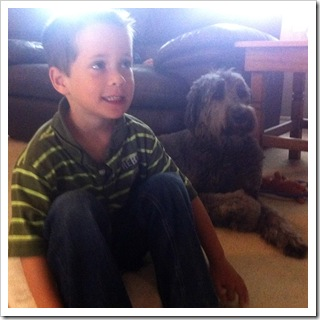 gray labradoodle female calm great with kids