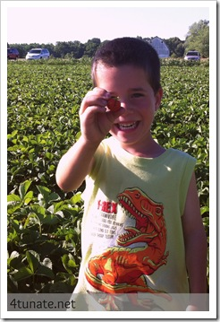 picking indiana strawberries in noblesville