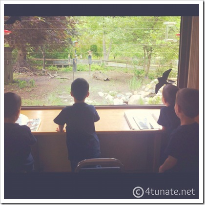 why we chose to homeschool our kindergarteners