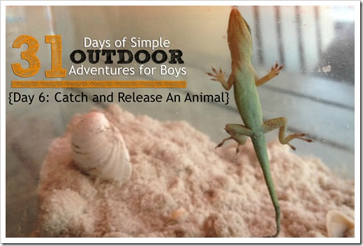 Day 6 Catch and Release An Animal Simple Outdoor Adventures for Boys.jpg