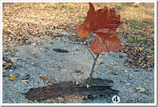 make a homemade sailboat with bark and sticks