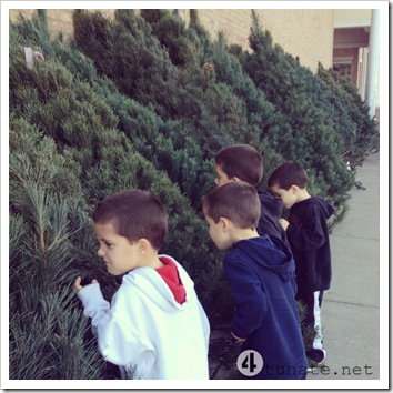 the smell of fresh cut christmas trees