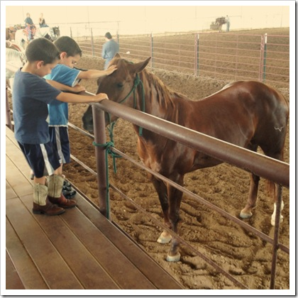 petting horses with kids