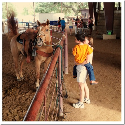 texas rodeo petting horses