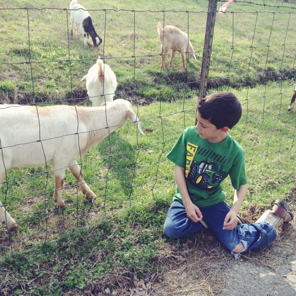 goat-farm-kids-alabama